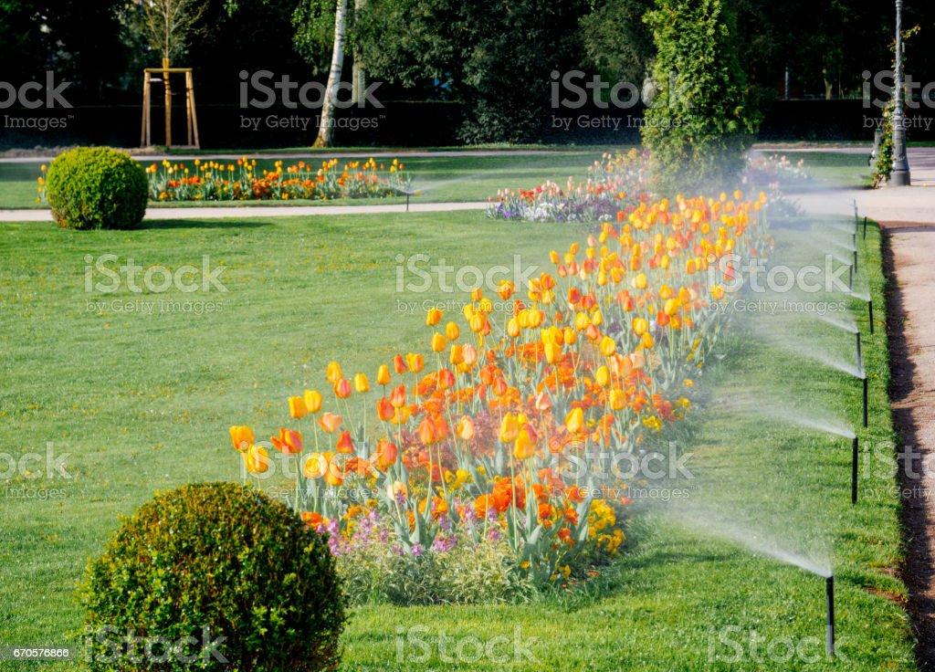 Ligne de pulvérisation d'irrigation moderne travaillant dans le parc jardin du matin - Photo