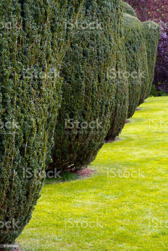 A row of neat garden trees stock photo