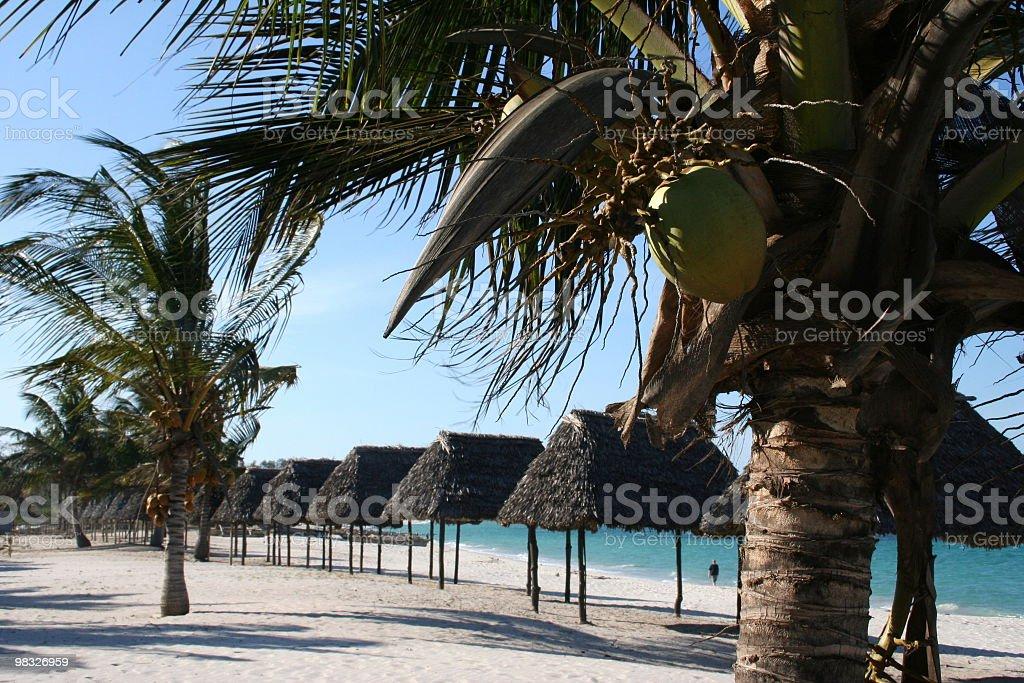Fila di palme e capanne sulla spiaggia tropicale foto stock royalty-free