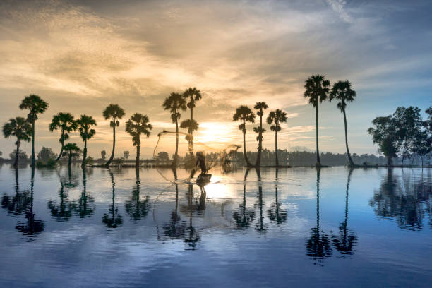 row of palm trees in silhouette reflect on the surface water of the river at sunrise - mekong river stock pictures, royalty-free photos & images