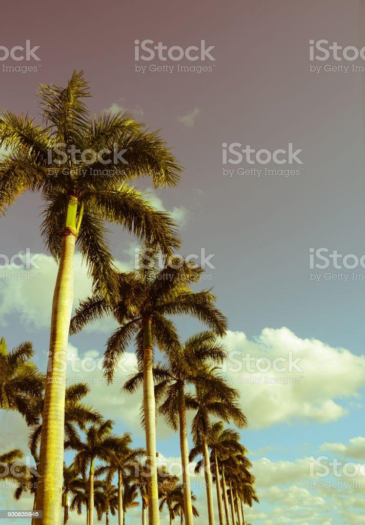 Row of palm trees. stock photo