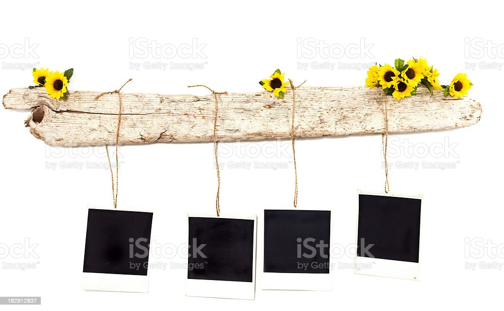 Row Of Polaroids Hanging From Driftwood stock photo