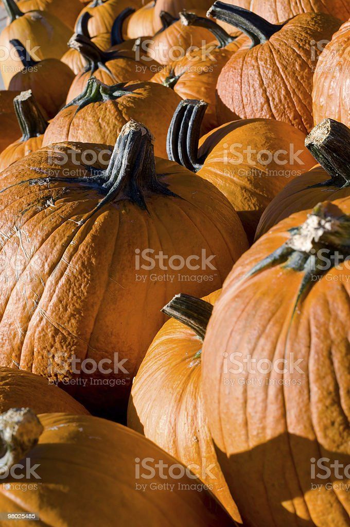 Row of pumpkins royalty-free stock photo