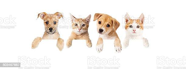 Row of puppies and kittens over blank banner picture id503467662?b=1&k=6&m=503467662&s=612x612&h=rd i2i2srepjy5ujkgcpsndulb1pjycafdc0wwxlwvo=