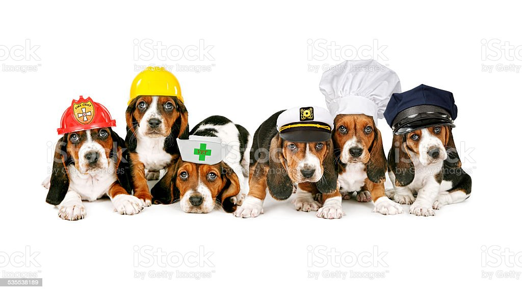 Row of Puppies Wearing Work Hats stock photo