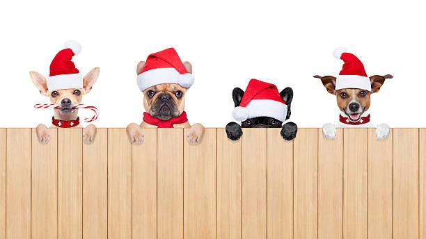 fila di babbo natale cani - sugar cane foto e immagini stock