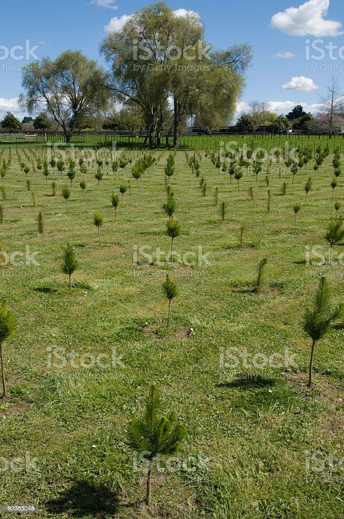 Reihe von kleinen Bäumen Lizenzfreies stock-foto