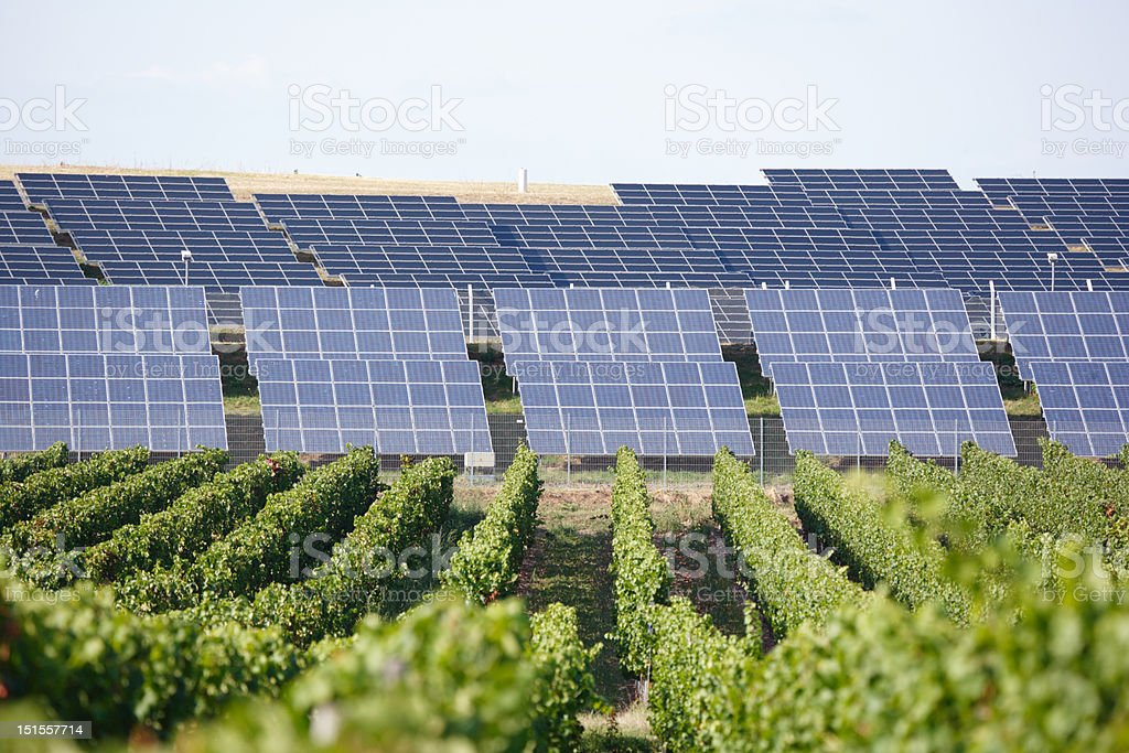 row of solar panels and vineyard in foreground stock photo