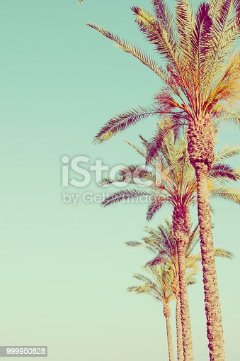Row of Tall Palm Trees on Toned Light Turquoise Sky Background. 60s Vintage Style Copy Space for Text. Tropical Foliage. Seaside Ocean Beach Vacation. Hip Funky Vintage