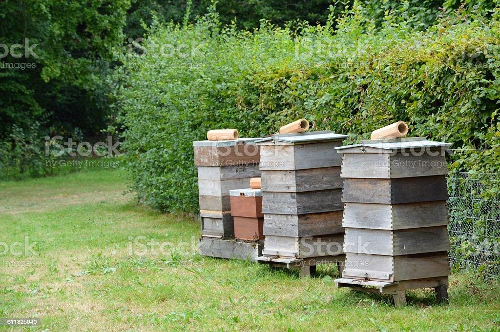 Row of three bee hives. stock photo