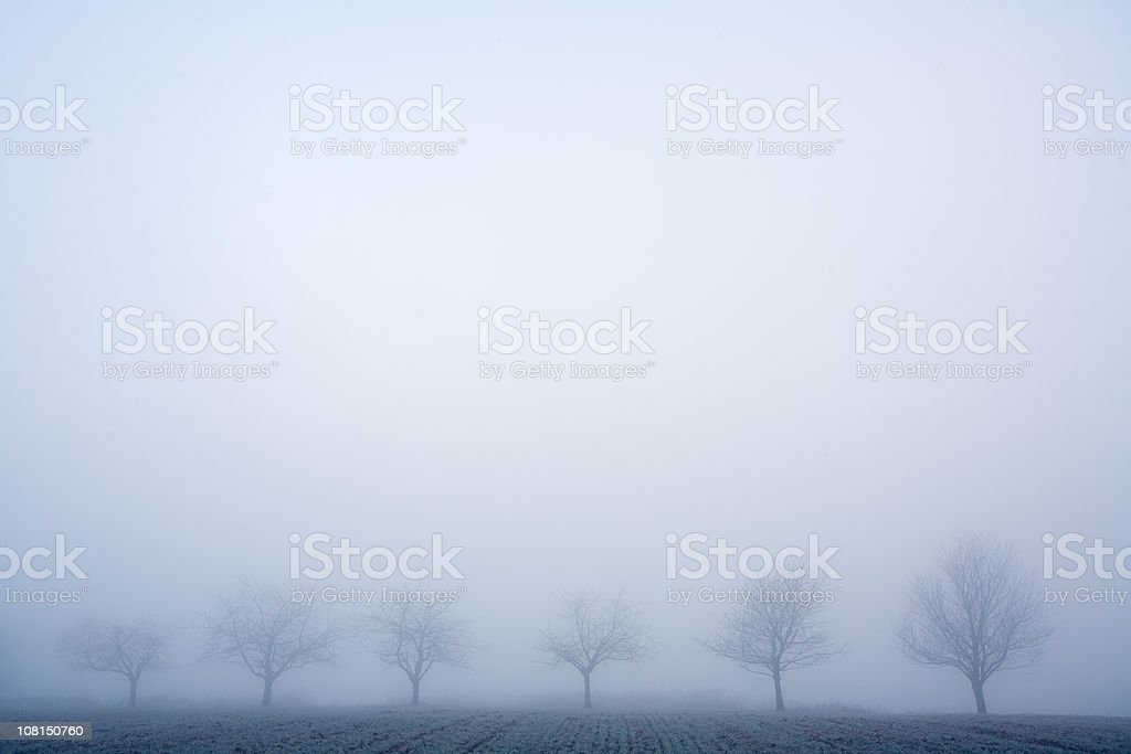 row of trees and fog royalty-free stock photo