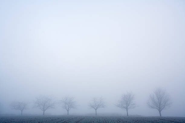 row of trees and fog stock photo