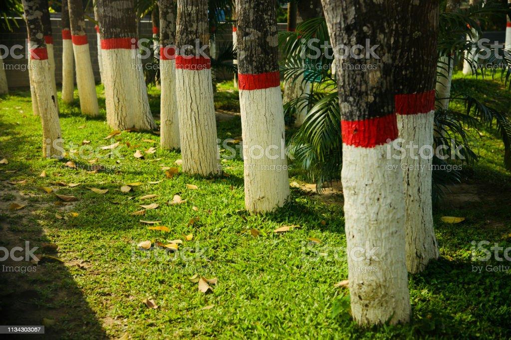 Row of trees around a park unique photo stock photo