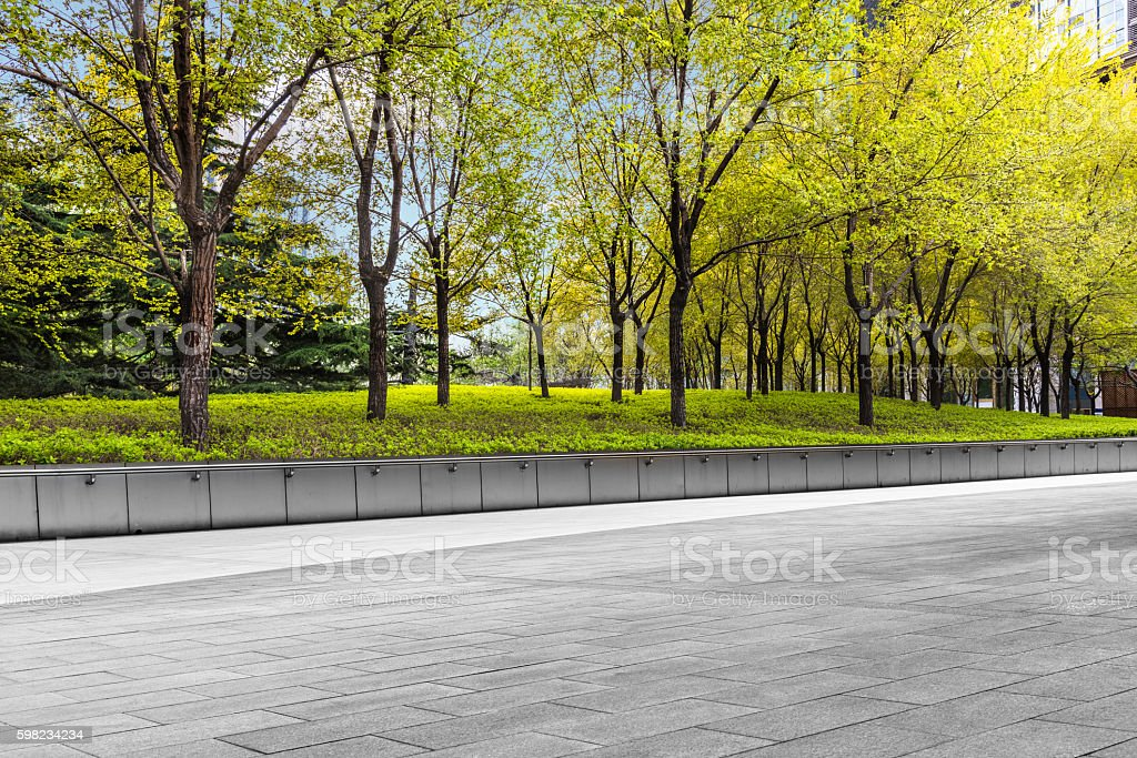 Row of trees beside pavement in downtown district foto royalty-free