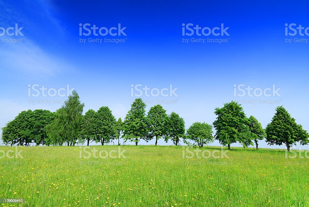 A row of trees in a green field under blue sky royalty-free stock photo