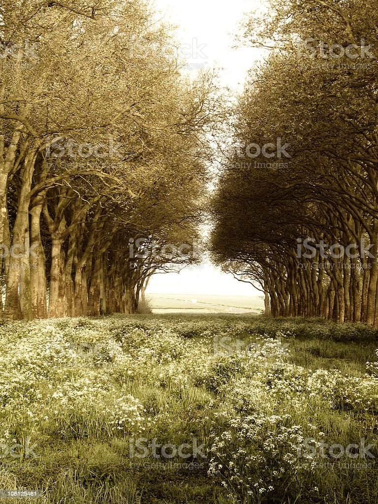 Row of Trees in Field royalty-free stock photo