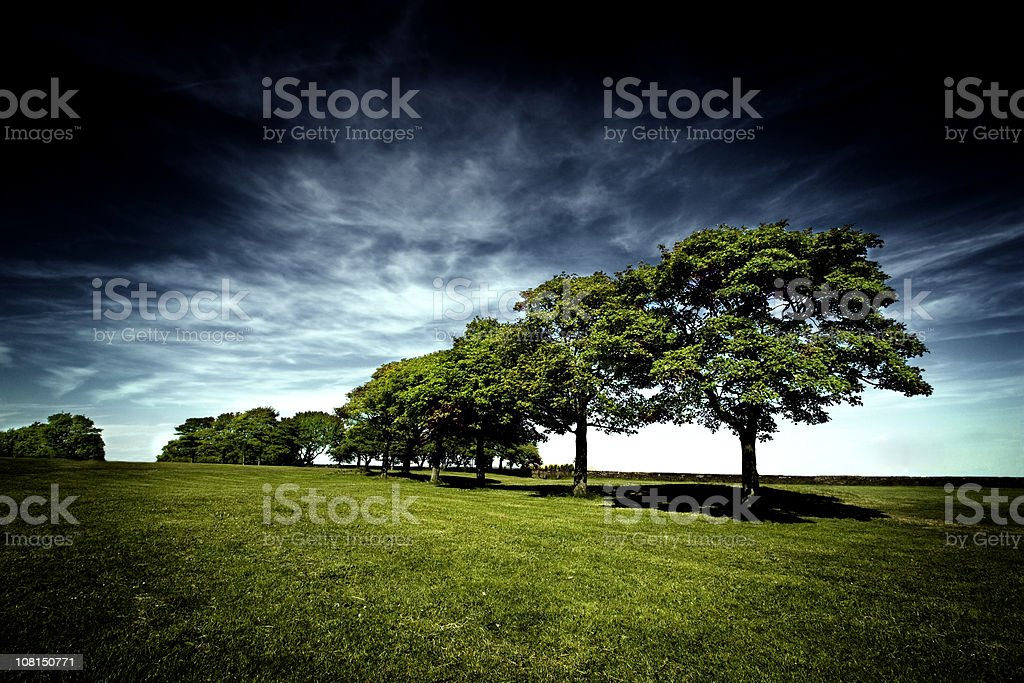 Row of Trees in Green Field Against Blue Sky royalty-free stock photo