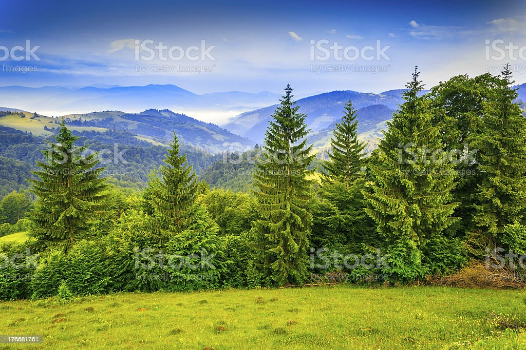 row of trees in mountains royalty-free stock photo