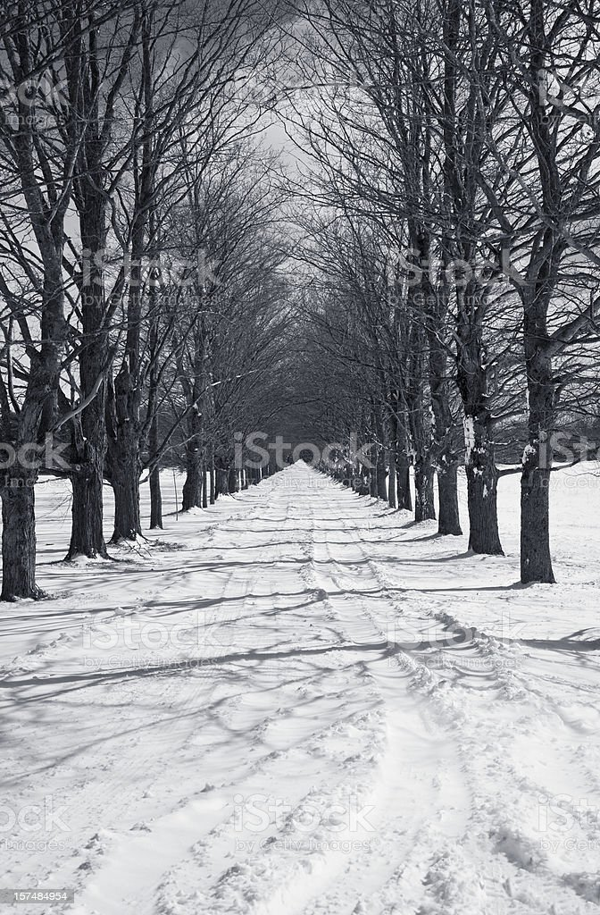 Row of Trees in Winter(b&w) stock photo