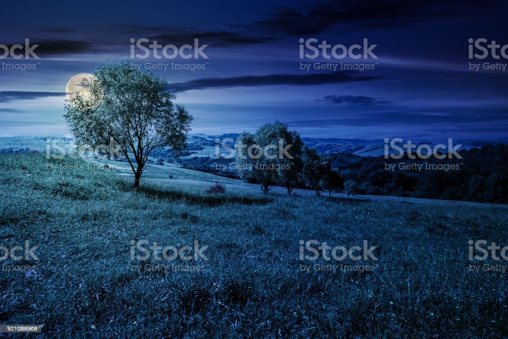 row of trees on grassy slope at night stock photo