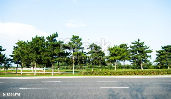A row of trees on the roadside