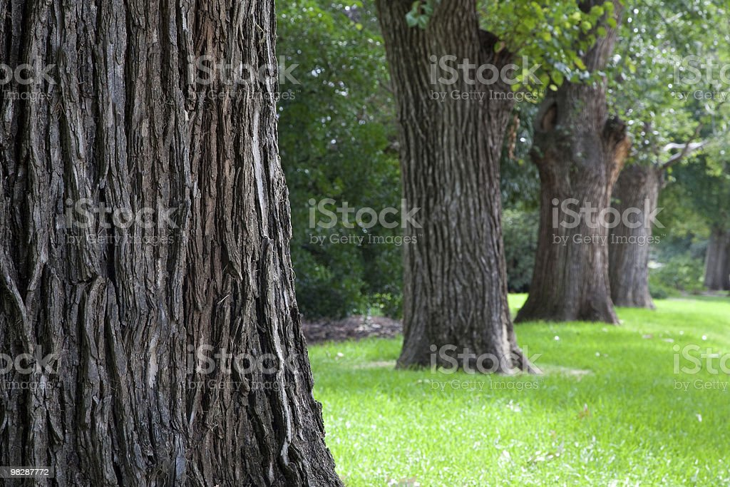 Row of Trees royalty-free stock photo