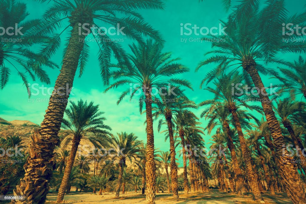 Row of tropic palm trees against green sky royalty-free stock photo