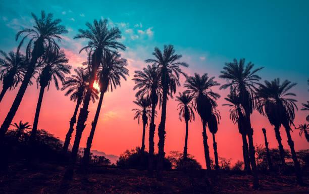 row of tropic palm trees against sunset sky - ibiza imagens e fotografias de stock