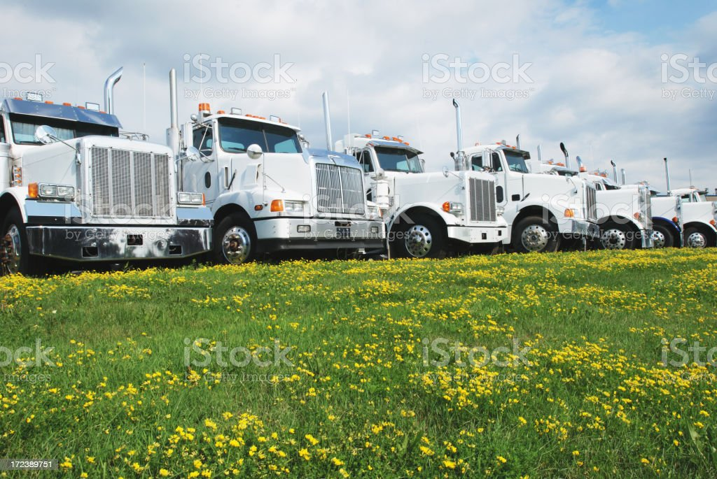 A row of trucks lined up in front of a field of flowers  stock photo