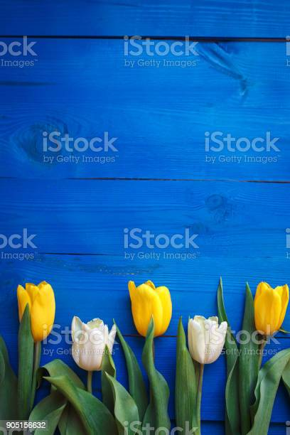 Row of tulips on blue wooden background with space for message womens picture id905156632?b=1&k=6&m=905156632&s=612x612&h=luz  d5 fz3t1fojv0xcfyvg2ytwurdovb2cmn9oewm=