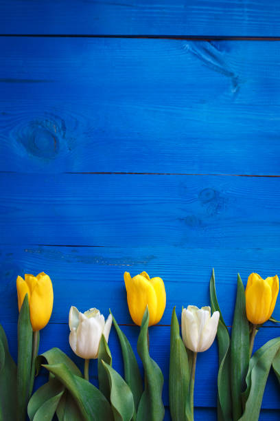 Row of tulips on blue wooden background with space for message womens picture id905156632?b=1&k=6&m=905156632&s=612x612&w=0&h=5jir1uxzhgd2yu4qt ktufbugxrdbbkvrjjrqjqce04=