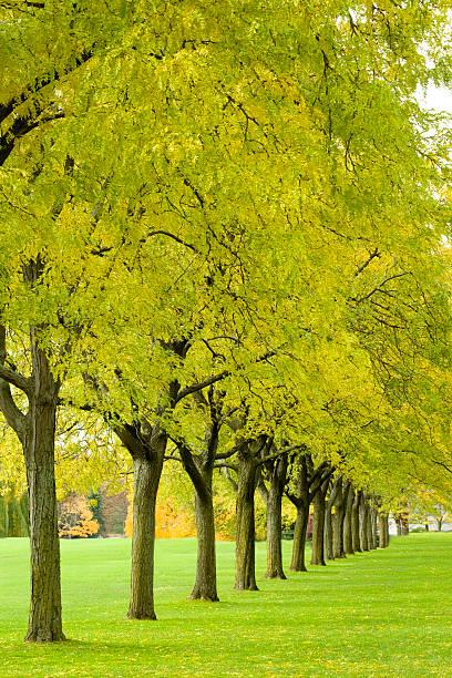 Row of vibrant yellow green trees stock photo