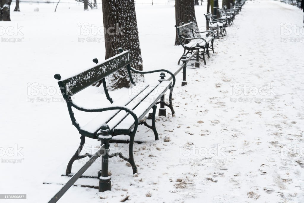 Excellent Row Of Wood Bench Cover By White Snow In The Garden With Caraccident5 Cool Chair Designs And Ideas Caraccident5Info