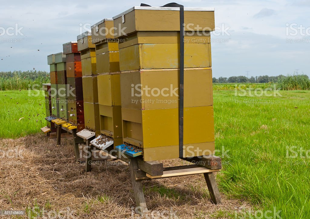 Row of wooden bee hives in a field stock photo