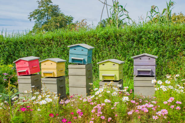 reihe von hölzernen bienenstöcken für bienen - bienenstock stock-fotos und bilder