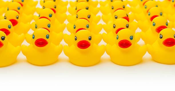 Row of yellow rubber duckies. stock photo