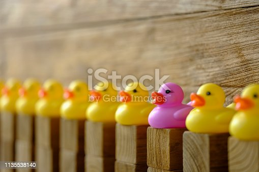 Row of yellow rubber ducks sitting on wood block columns with a single different purple rubber duck sitting on a wooden block column standing out from the crowd against a wooden paneled weathered background..