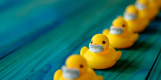 Row of yellow rubber ducks wearing surgical masks, in a formal line, scene set on an old turquoise, blue and green colored weathered, wood grain, wooden panel background, conceptually representing water. stock photo
