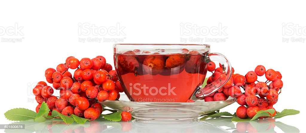 Rowan berries and cup tea with rosehips isolated on white. photo libre de droits