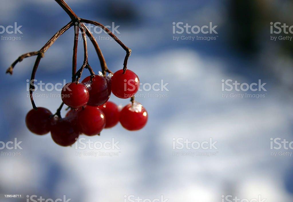 Rowan berries at winter (4) royalty-free stock photo
