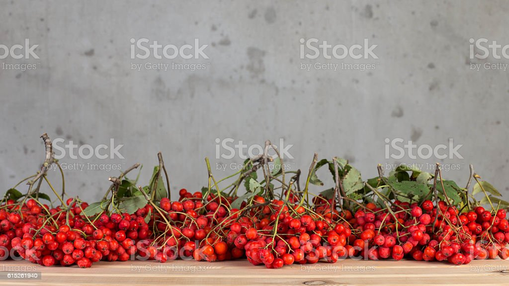 rowan stock photo