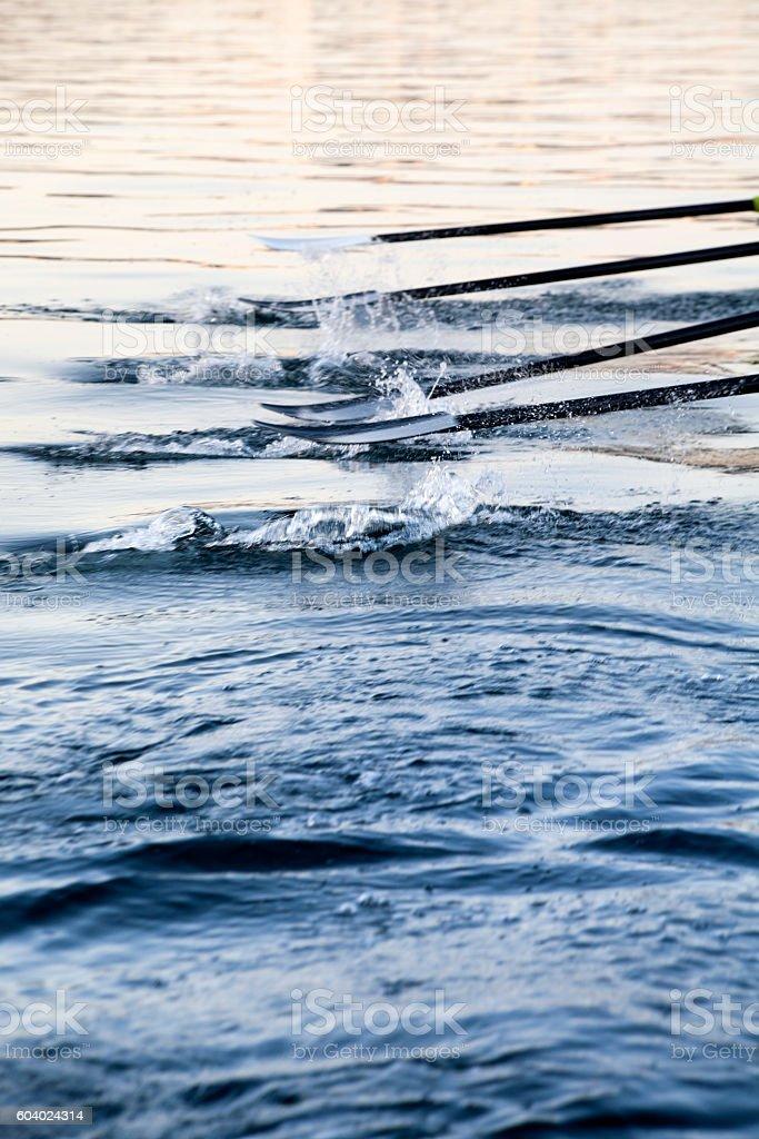 Rowing oars In water stock photo