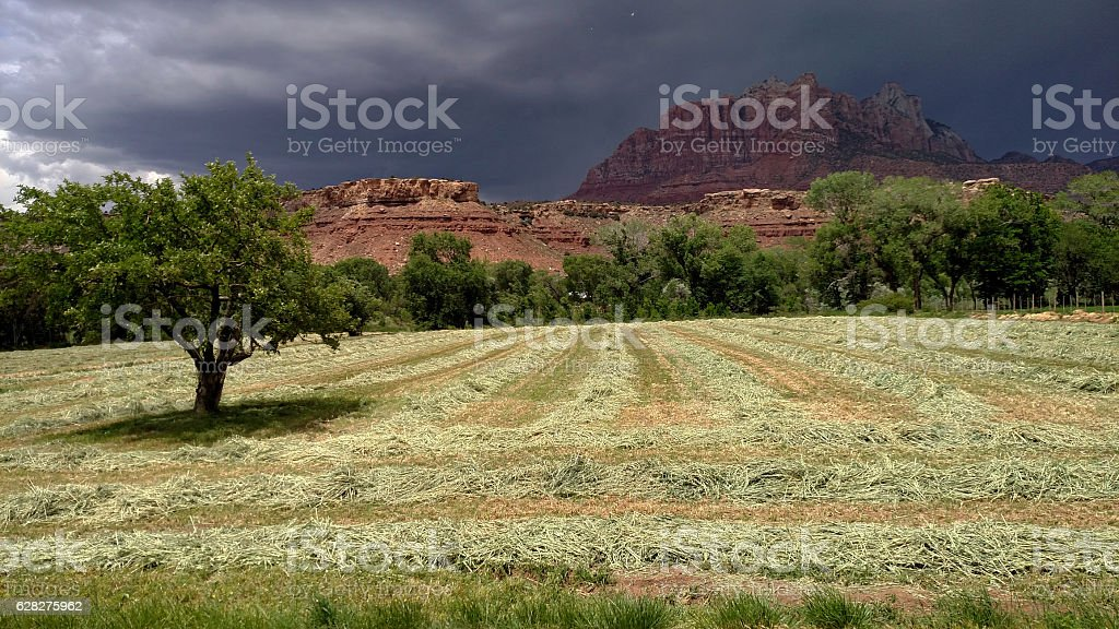 rows oat hay fields storm clouds Mount Kinesava Rockville Utah stock photo