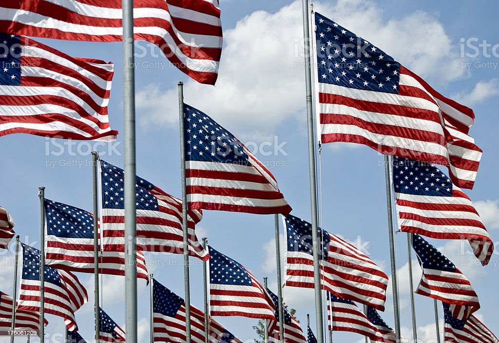 Rows of American flags royalty-free stock photo