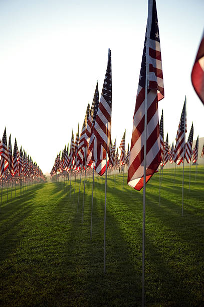 rows of american flags with the sun behind them - memorial day stok fotoğraflar ve resimler