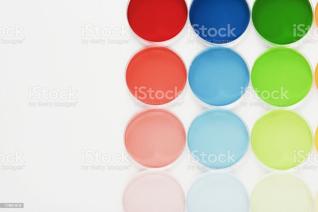Rows of colorful petri dishes stock photo