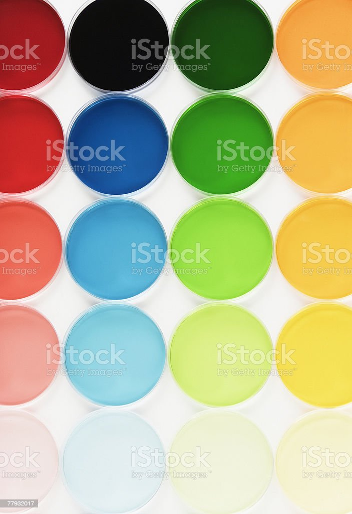 Rows of colorful petri dishes royalty-free stock photo