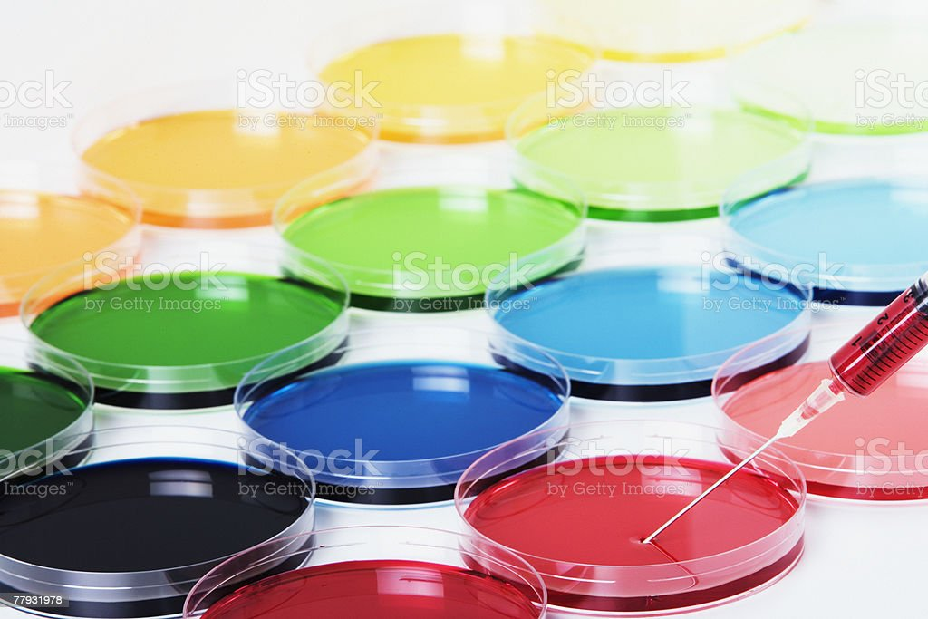 Rows of colorful petri dishes with a syringe in one royalty-free stock photo