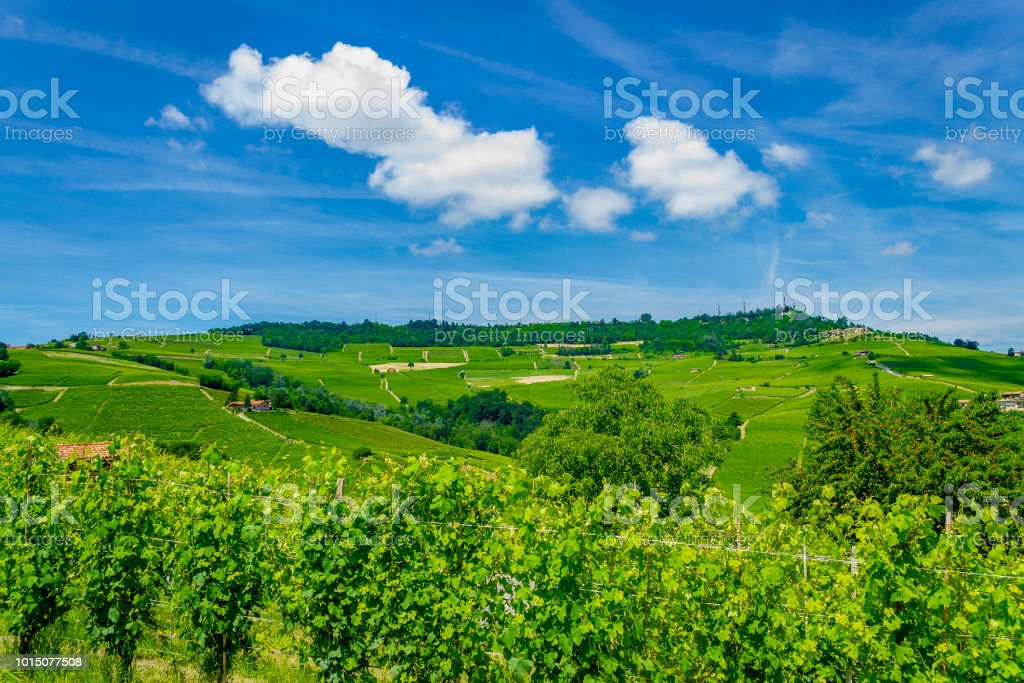 Rows of grapes in the Langhe (Cuneo, Piedmont, Italy). - foto stock