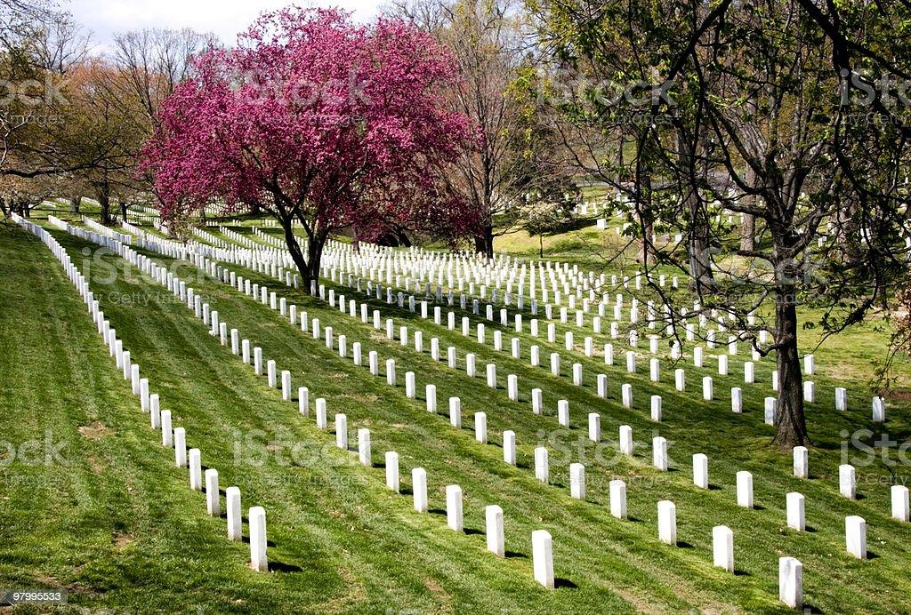 Rows of gravestones in Arlington National Cemetery royalty free stockfoto